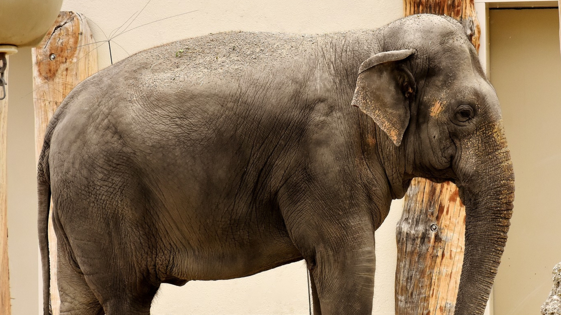 Ad Tech; Addressing The Elephant in Agency Rooms